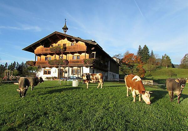 1 Hirschbichlhof mit Kühen auf der Weide