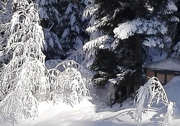 Alpbach Dorf