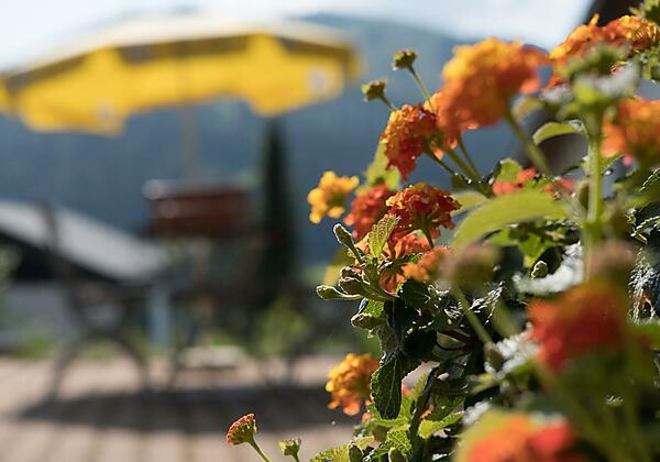 Blumen auf der Sonnenterrasse