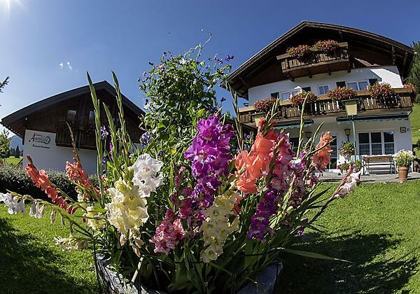 Unsere Blumenpracht im Sommer