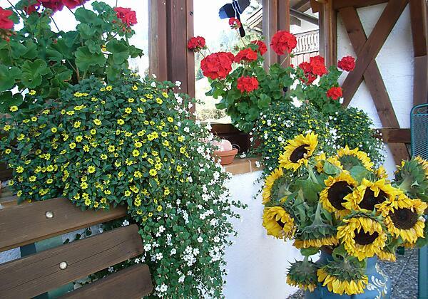 Blumen auf der Terrasse