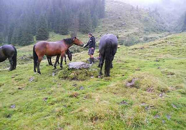 unsere Pferde in Hinterglemm