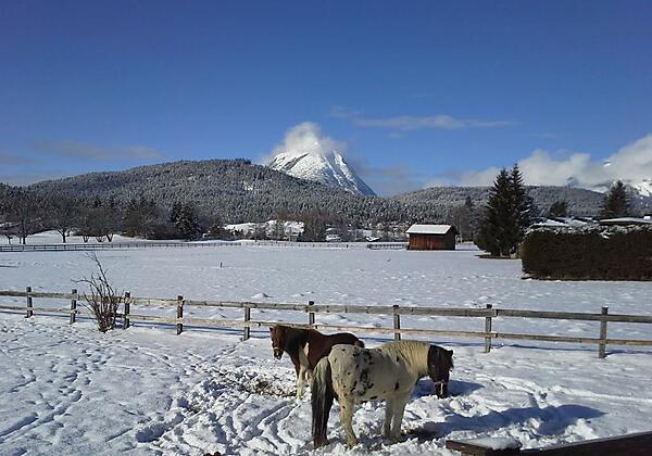 Haus Föhrenwald Top 16 Seefeld Pony's im Winter