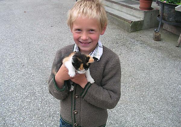 Katzenkinder zum Liebhaben