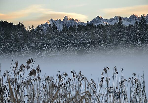 Nebel über dem Wildsee