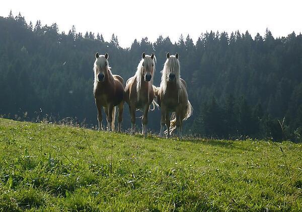 Pferde des Landhauses