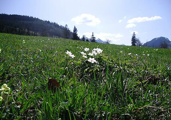 Frühjahrserwachen