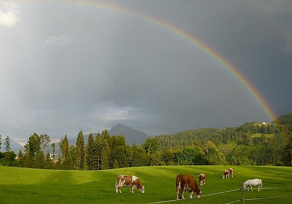 Regenbogenklein