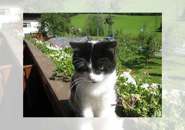 Unsere Katze Tinka